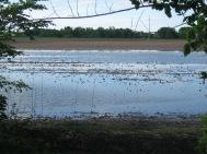 Flooded field.