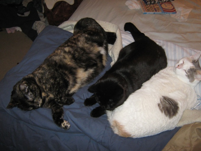 Cats Take Over Bedroom!
