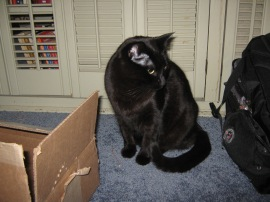 Black cat with holiday toys (a box and a knapsack).