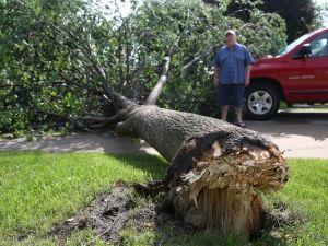 A tree down a few blocks away.