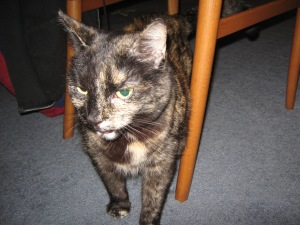 My cat, Helen