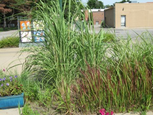 Prairie grass on the coffeehouse patio.
