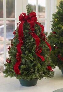 Next year's Christmas tree!