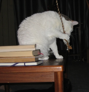 Moby on coffee table with mouse