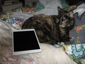 Cat with IPad!
