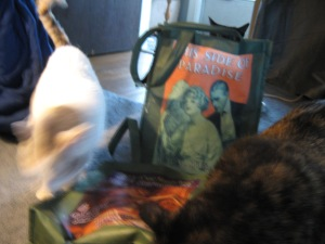 My cats speedily (and blurrily) explore emergency B&N bags.