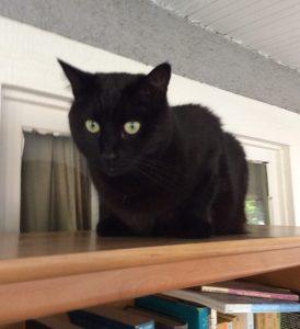 Book Cat!