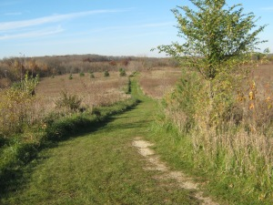 Prairie in Lower Arboretum
